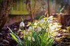Endlich..... Frühling!!!