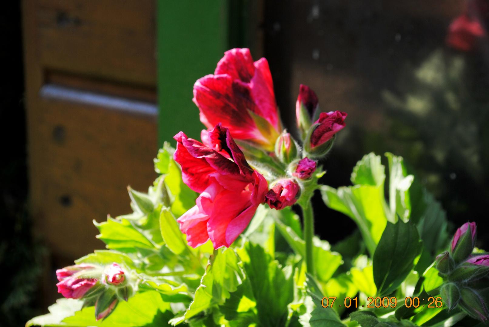 Endlich Frühling ;-)