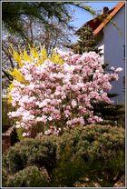 Endlich Frühling auch in Marburg