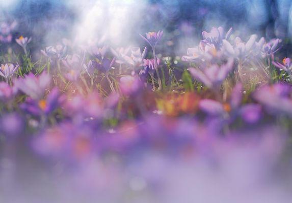 *** Endlich Frühling ***
