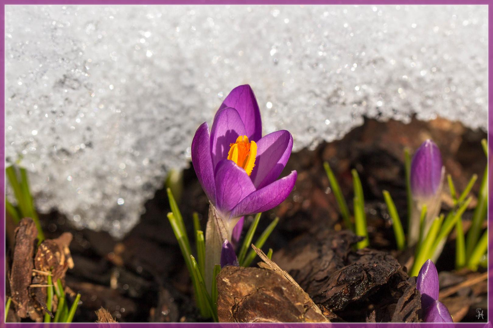 Endlich Frühling !!!