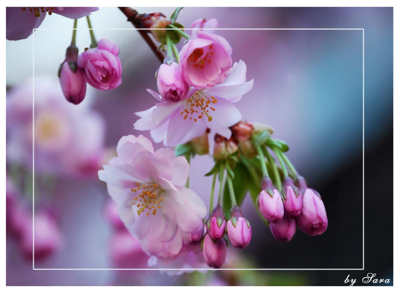 Endlich Frühling!!