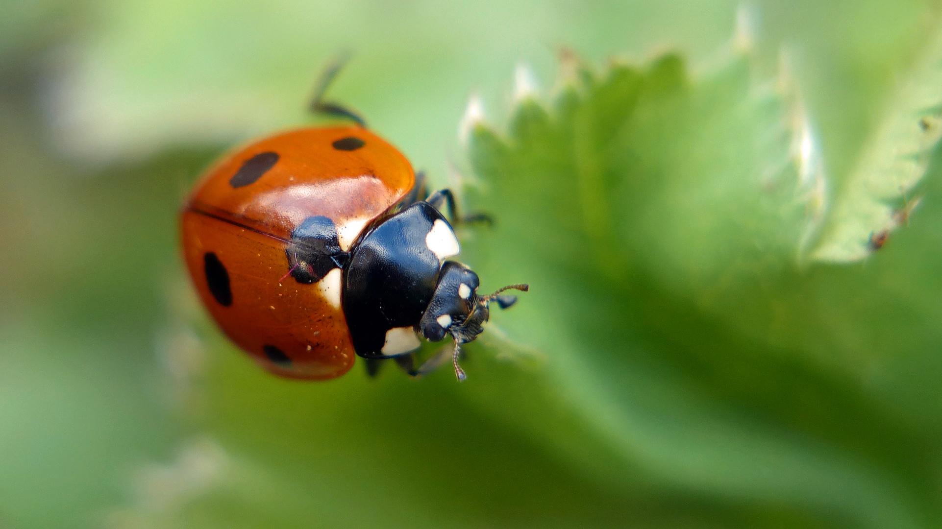 Endlich Frühling, die ersten Käfer sind da !
