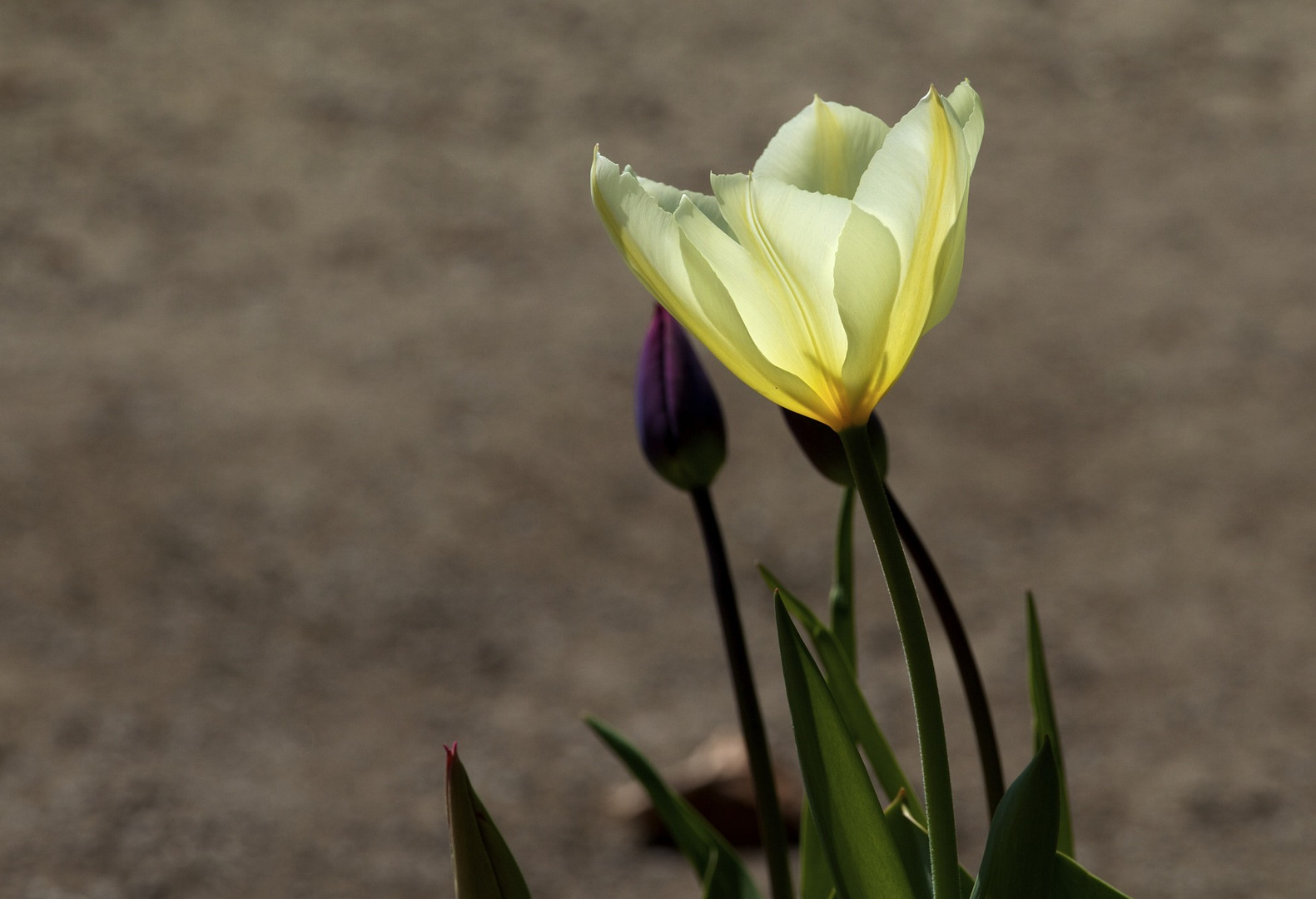 ...endlich, Frühling!!!