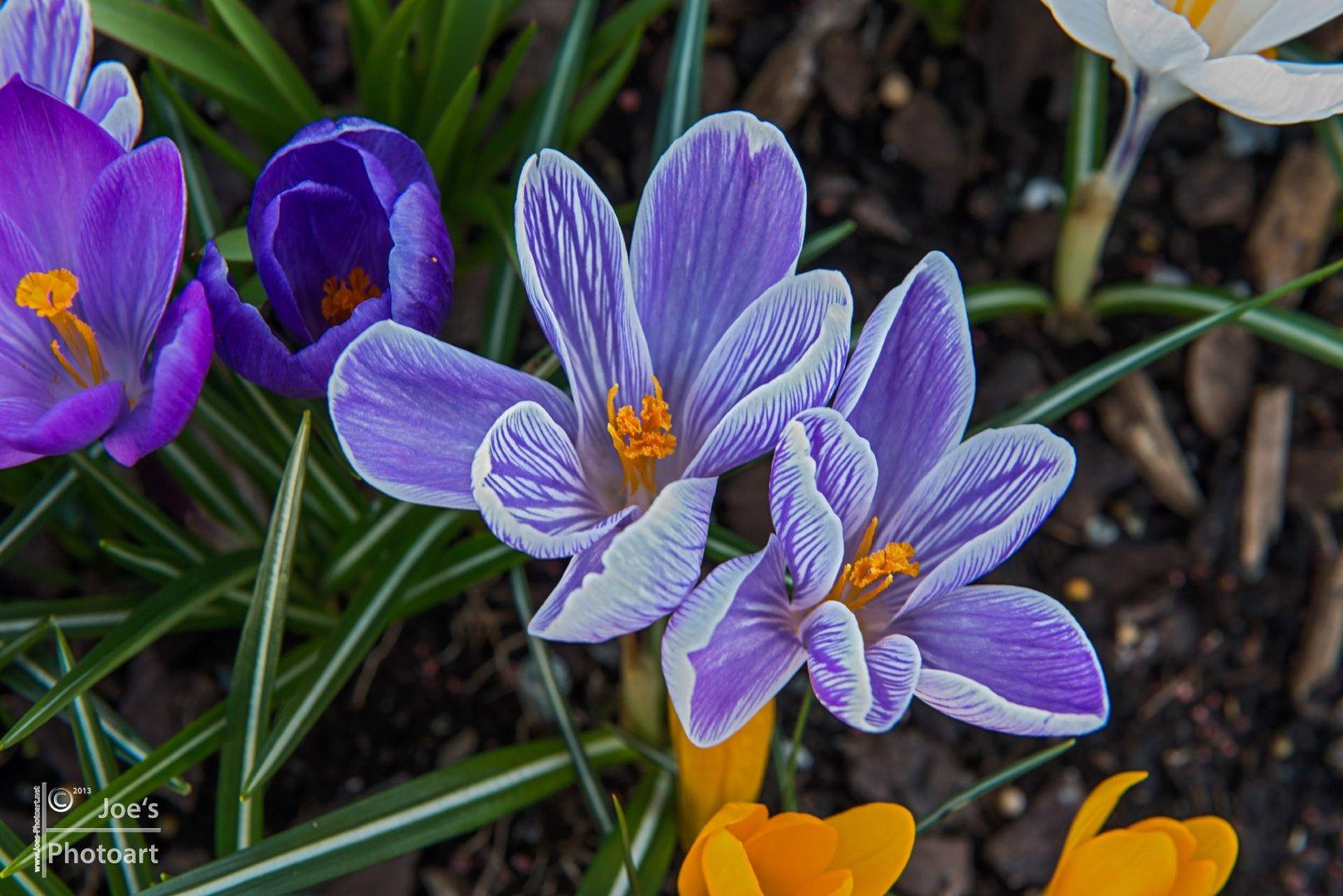 Endlich Frühling.....
