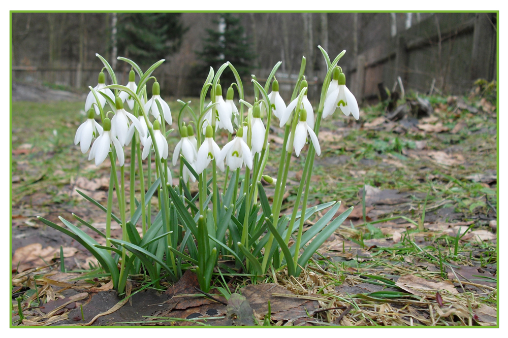 endlich Frühling II