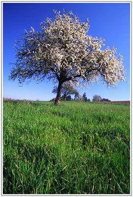 Endlich Frühling in Deutschland