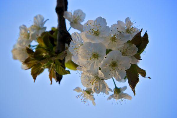 Endlich Frühling ... Teil 1