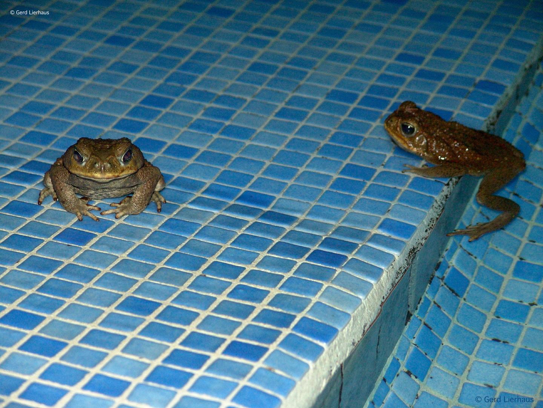 Endlich haben wir den Pool für uns