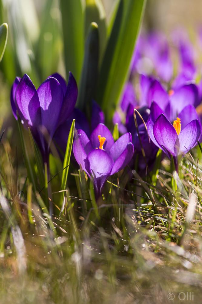 Endlich ist der Frühling da