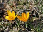 endlich ist Frühling