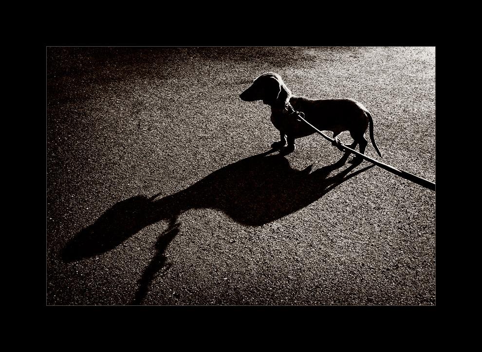 Endlich ist sein Schatten so groß, wie sein Ego ...