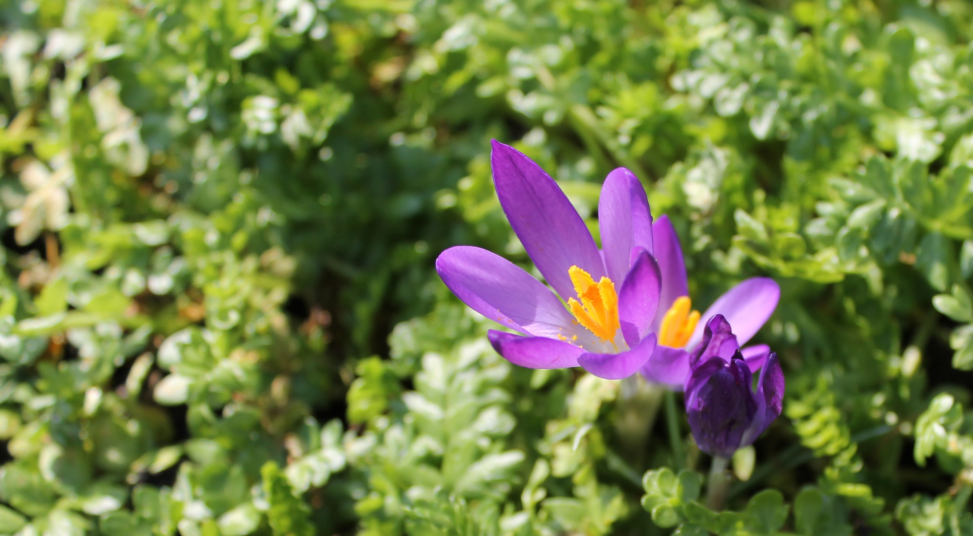 Endlich kommt der Frühling