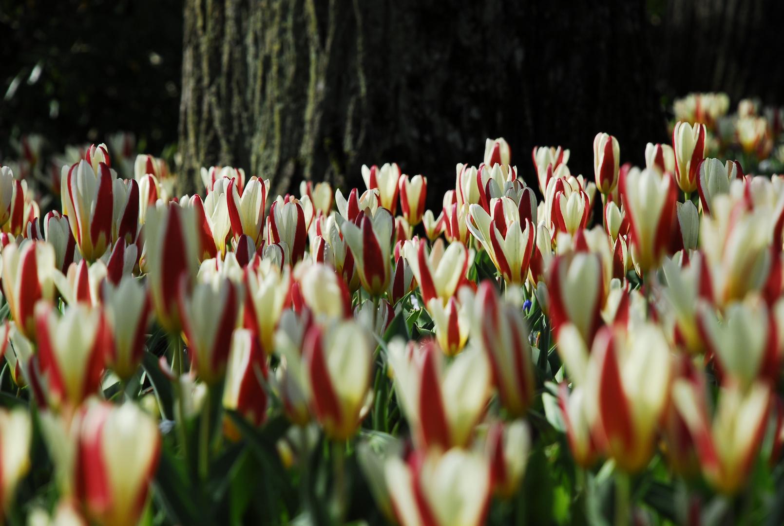 Endlich mal Frühling...