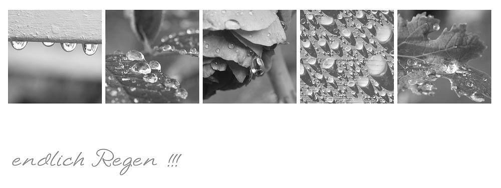 endlich Regen!!!