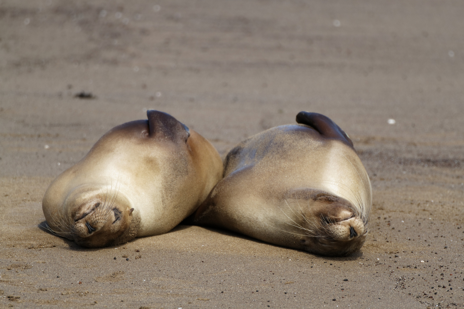 Endlich Urlaub! Seelöwen auf Galapagos