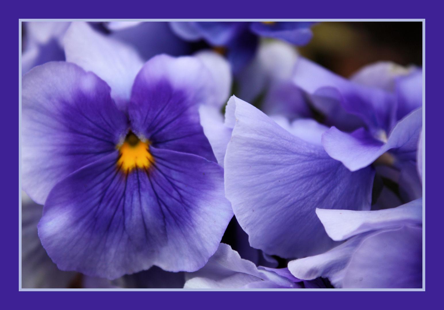 Endlich viele farbige Blumen