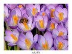 Endlich wieder Arbeit für Bienen