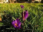 Endlich wieder Farben im Garten...