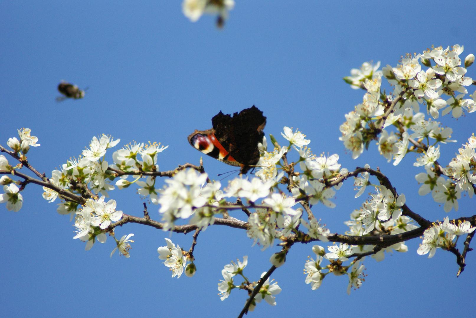 Endlich wieder Frühling