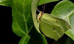 "endlich wieder ""Schmetterlings-Wetter""..."