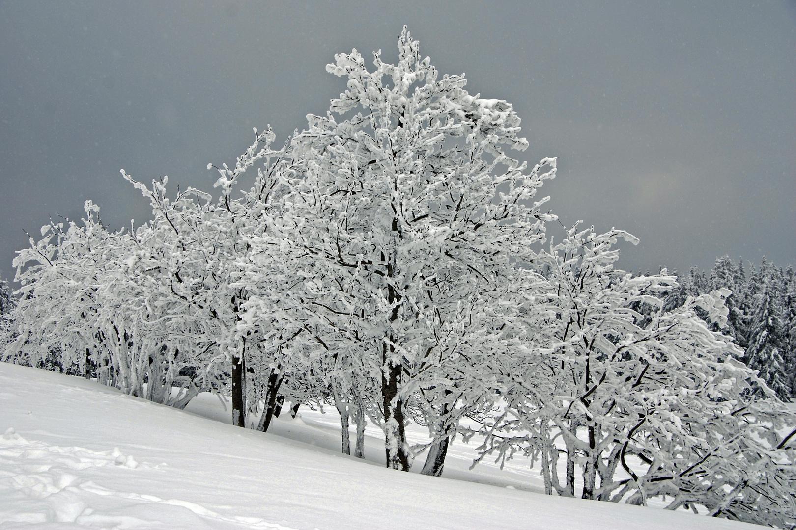 ... endlich Winter