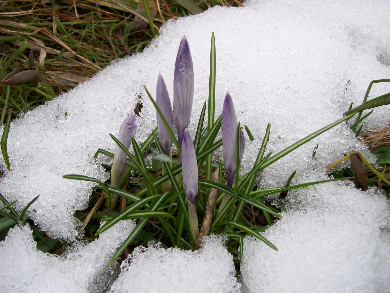 Endlich wird es doch Frühling