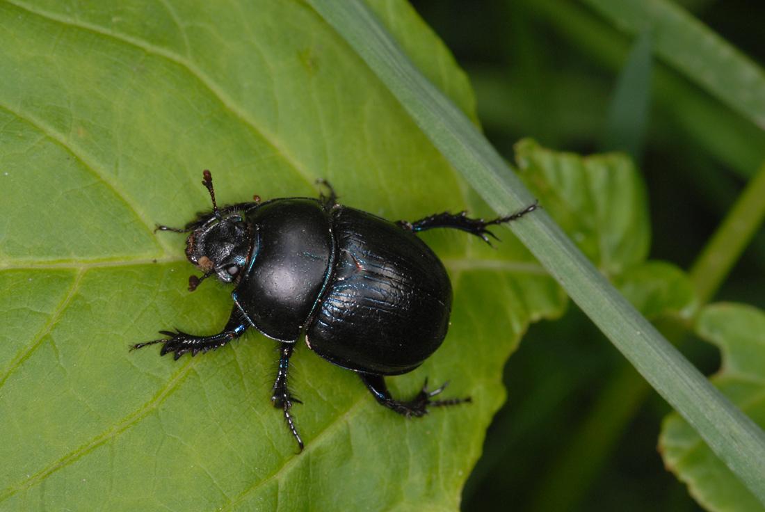 Endliche ein Insektenart, die ich genau kenne