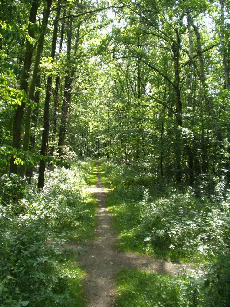 Endloser Weg im Wald