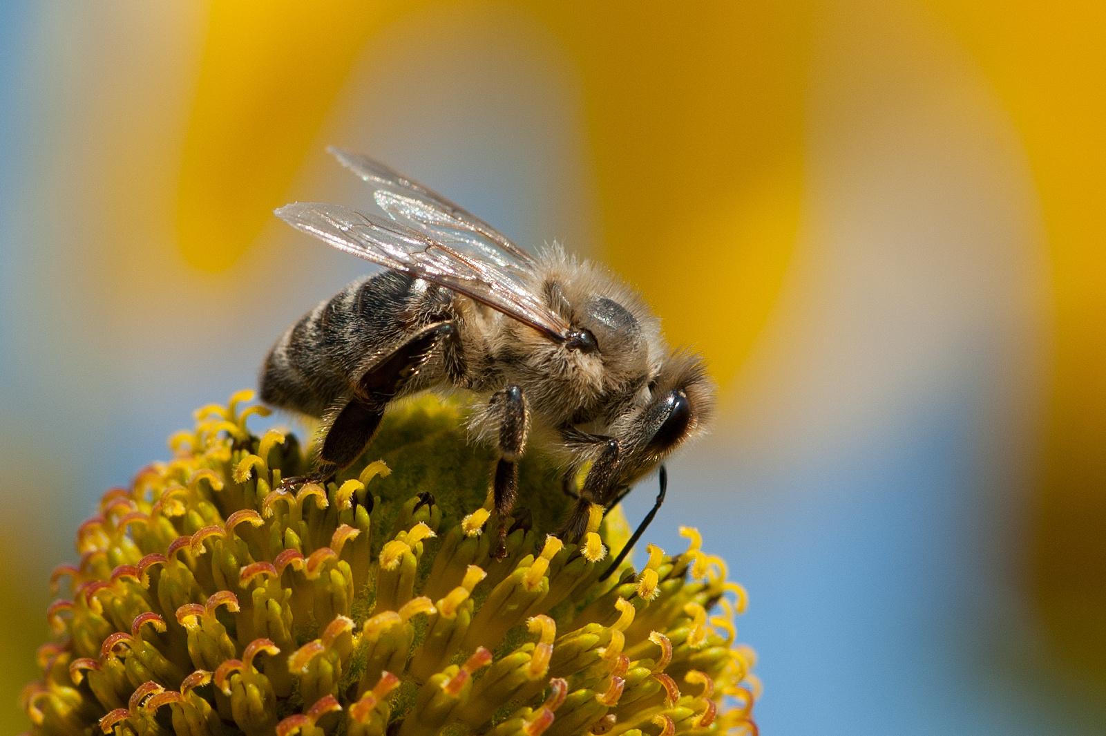 Endspurt der Bienen für 2012 ...