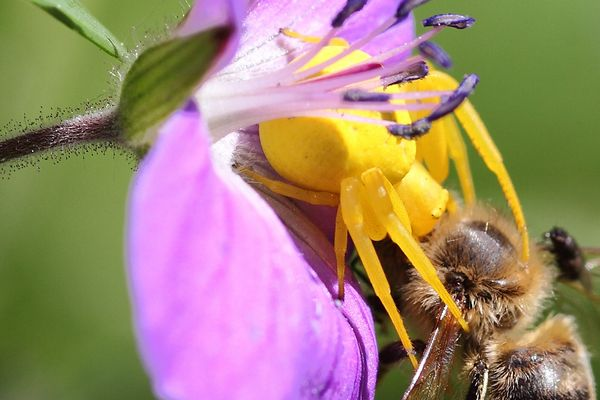 Endstation für Biene Maja