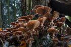 ENDZEITSTIMMUNG für Pilze