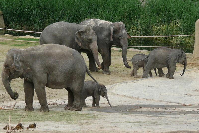 Ene Besuch im Zoo (Köln) - 3