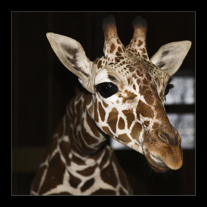 Ene Besuch im Zoo... V