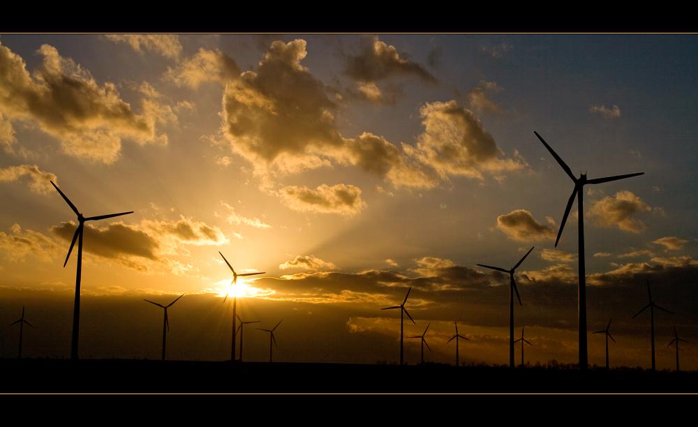 Energie(n), oder unsere Wälder von 2050