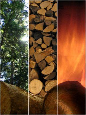 Energiestoff Holz - Gewachsen über Jahre um kurzweilige Wärme zu spenden
