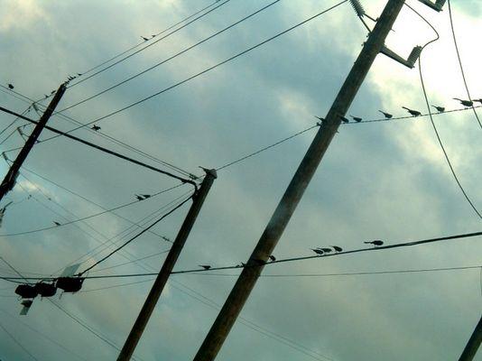 energybirds