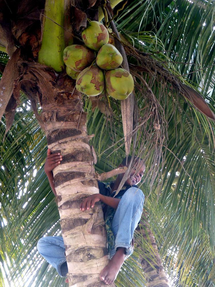 enfant dans le palmier