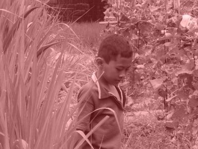 enfant dans les rizières