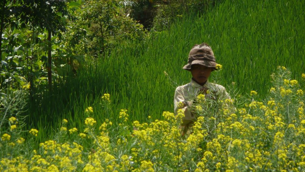enfant des rizières