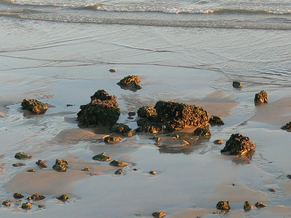 Enfin la marée basse, je vais pouvoir me réchauffer.............