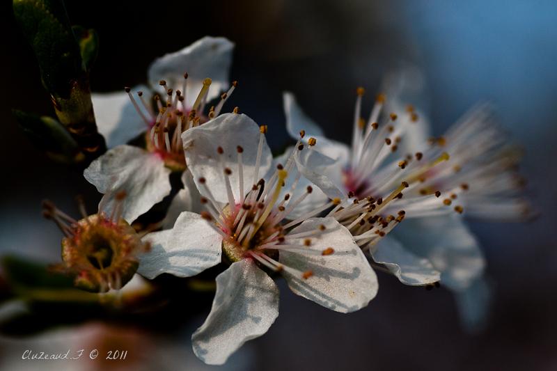 Enfin le printemps!!!
