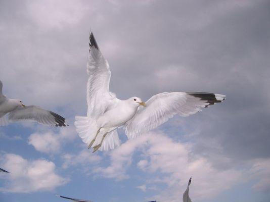 Engel der Natur 2