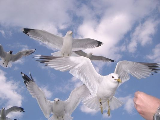 Engel der Natur
