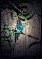 engel fliegen einsam....