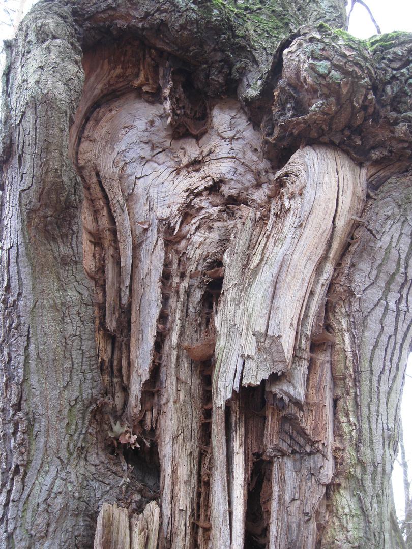 Engel im Baum