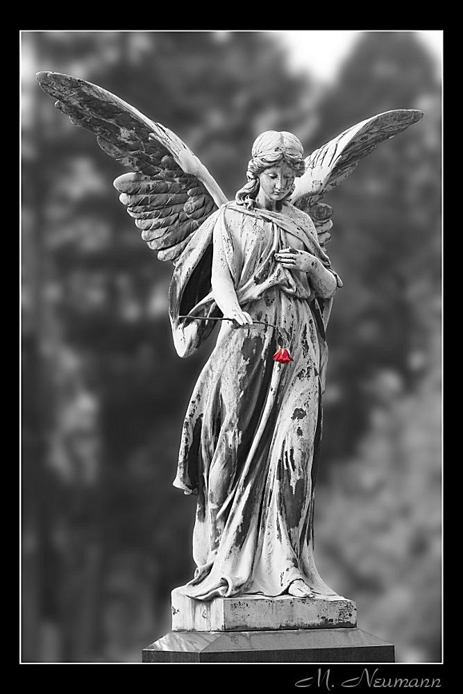 Engel mit Rose 2. Versuch