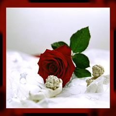 Engel und Rose