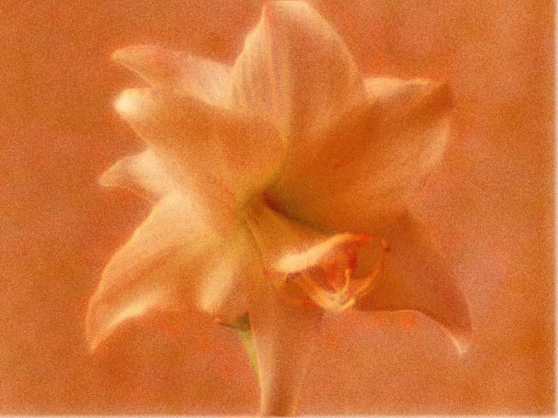 Engelsblüte