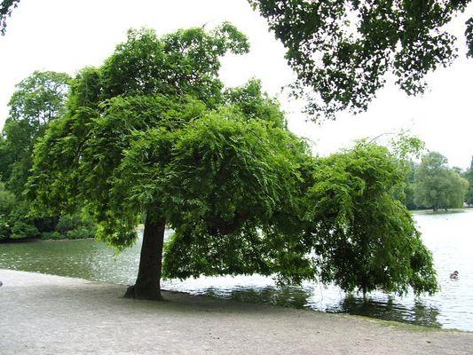 Englischer Garten München Parklandschaft
